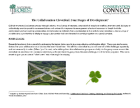 Collaboration Cloverleaf